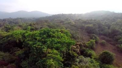 Couple Transforms Destroyed Farmlands In India Into Wildlife Sanctuaries